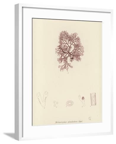 British Sea-Weed--Framed Art Print
