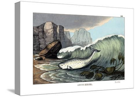 Narwal, 1860--Stretched Canvas Print