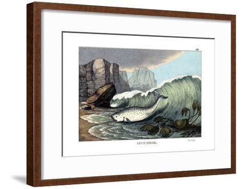 Narwal, 1860--Framed Art Print