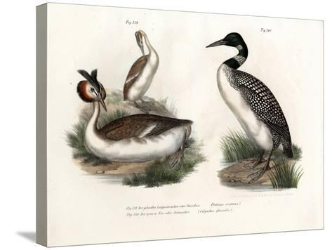 Great Crested Grebe, 1864--Stretched Canvas Print