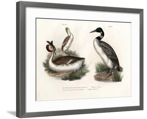 Great Crested Grebe, 1864--Framed Art Print