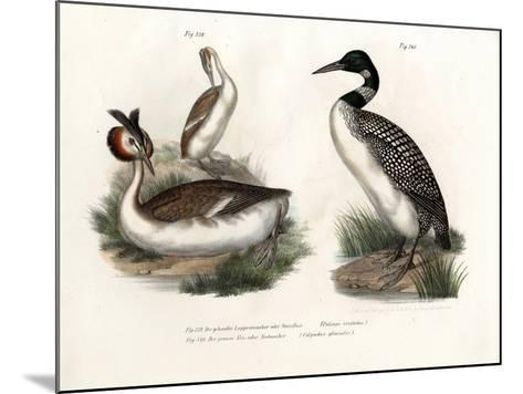Great Crested Grebe, 1864--Mounted Giclee Print