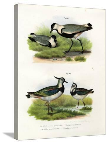 Spur-Winged Lapwing, 1864--Stretched Canvas Print