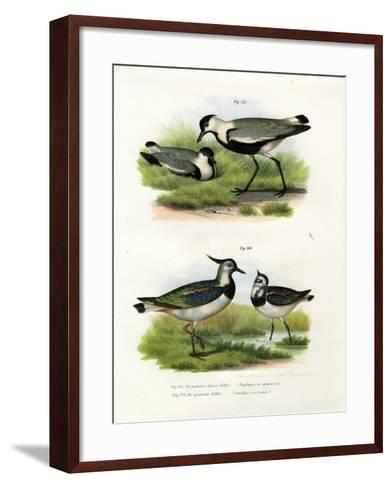 Spur-Winged Lapwing, 1864--Framed Art Print