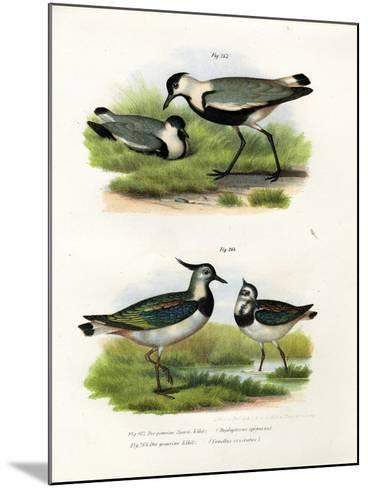 Spur-Winged Lapwing, 1864--Mounted Giclee Print