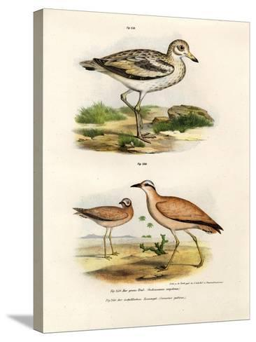 Thick-Kneed Bustard, 1864--Stretched Canvas Print