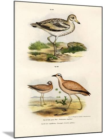 Thick-Kneed Bustard, 1864--Mounted Giclee Print