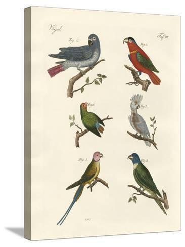 Parrots of the Old World--Stretched Canvas Print