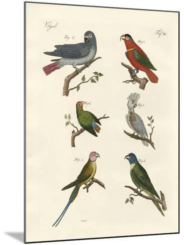 Parrots of the Old World--Mounted Giclee Print