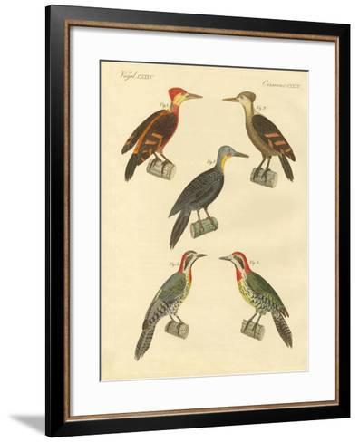Beautiful and Foreign Woodpecker--Framed Art Print