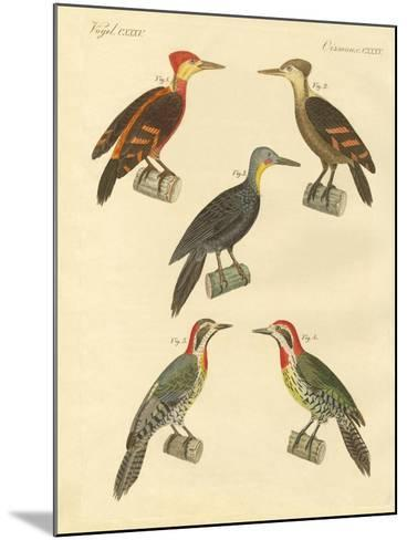 Beautiful and Foreign Woodpecker--Mounted Giclee Print