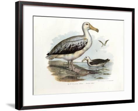 Wandering Albatross, 1864--Framed Art Print