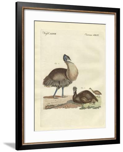 The Casuar from Australia--Framed Art Print