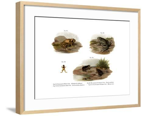 Muller's Narrowmouth Toad--Framed Art Print