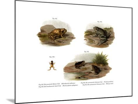 Muller's Narrowmouth Toad--Mounted Giclee Print