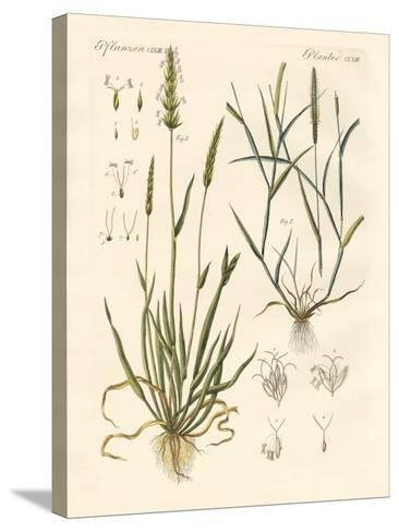 Strange Kinds of Herbage--Stretched Canvas Print