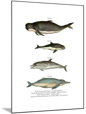 Long-Finned Pilot Whale, 1860--Mounted Giclee Print
