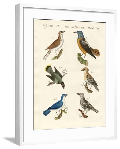 Kinds of Shrikes -- or Red-Backed Shrikes--Framed Art Print