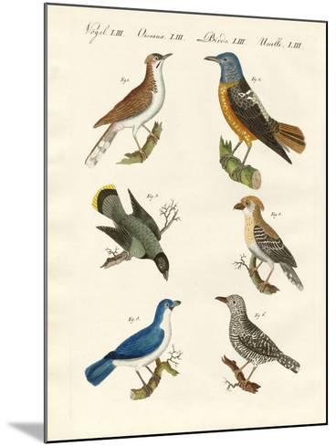 Kinds of Shrikes -- or Red-Backed Shrikes--Mounted Giclee Print