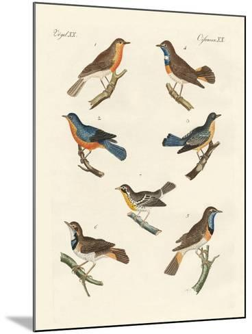 Redbreasts, Bluethroats and Yellowthroats--Mounted Giclee Print