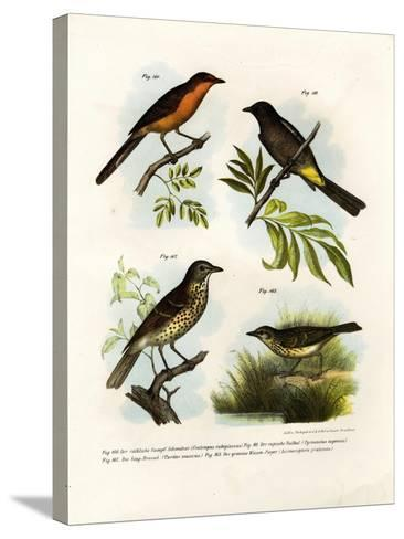 Rufous-Breasted Babbler, 1864--Stretched Canvas Print