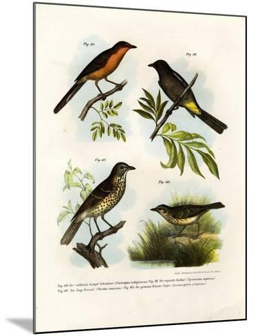 Rufous-Breasted Babbler, 1864--Mounted Giclee Print