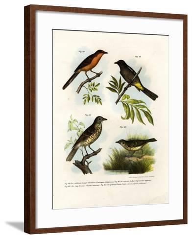 Rufous-Breasted Babbler, 1864--Framed Art Print
