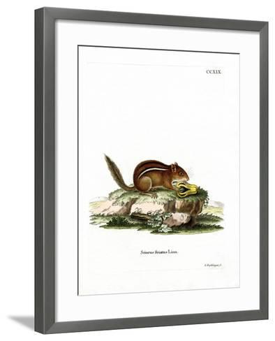 Eastern American Chipmunk--Framed Art Print