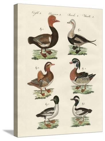 Different Kinds of Ducks--Stretched Canvas Print
