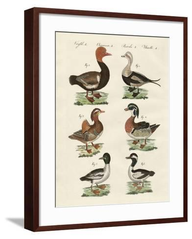 Different Kinds of Ducks--Framed Art Print