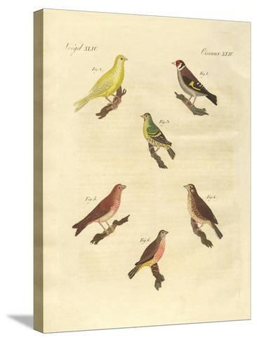 Different Kinds of Larks--Stretched Canvas Print