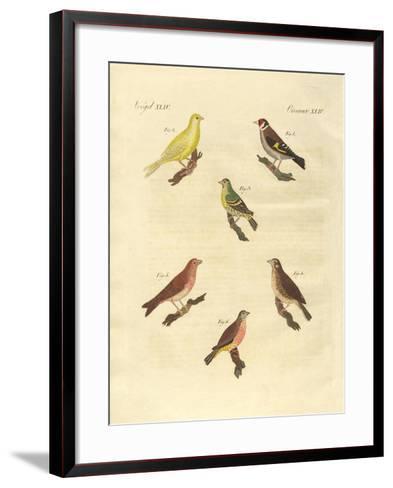 Different Kinds of Larks--Framed Art Print