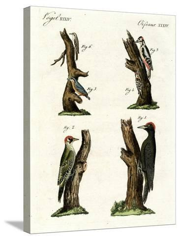 Different Kinds of Woodpecker--Stretched Canvas Print