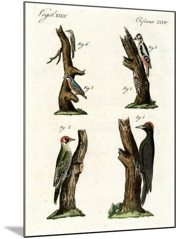 Different Kinds of Woodpecker--Mounted Giclee Print