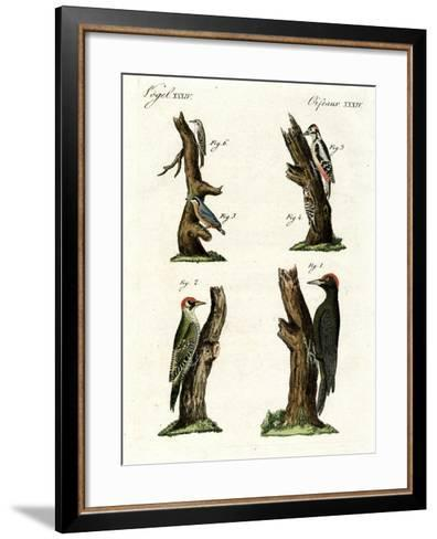 Different Kinds of Woodpecker--Framed Art Print