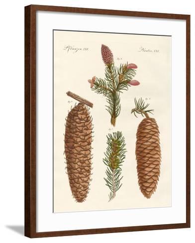 Indigenous Coniferous Woods--Framed Art Print
