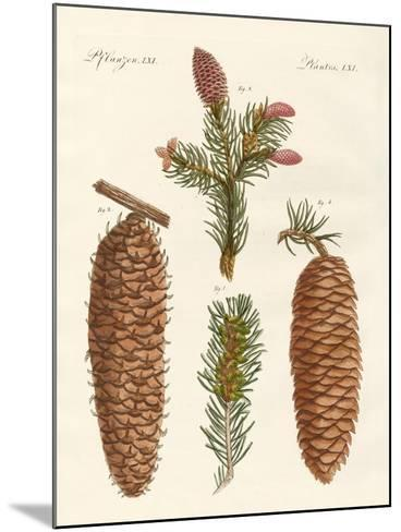 Indigenous Coniferous Woods--Mounted Giclee Print