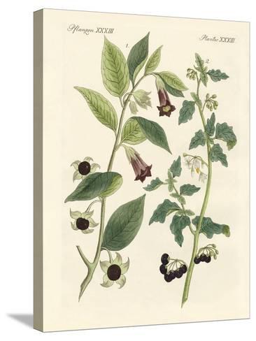 Indigenous Poisonous Plants--Stretched Canvas Print