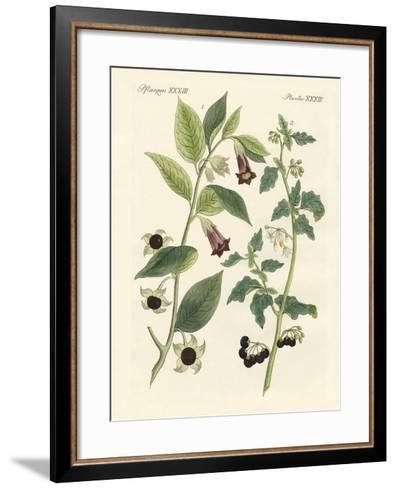 Indigenous Poisonous Plants--Framed Art Print