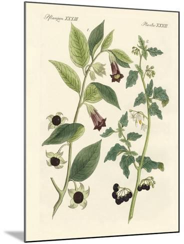 Indigenous Poisonous Plants--Mounted Giclee Print