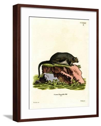 Red Giant Flying Squirrel--Framed Art Print