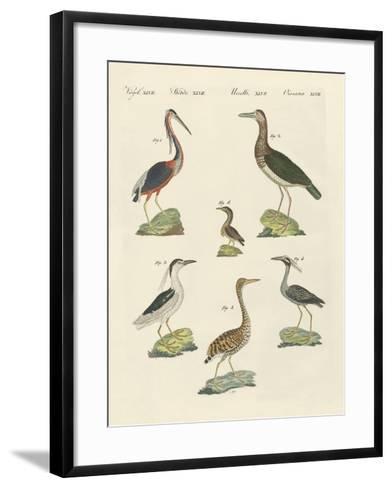 Different Kinds of Herons--Framed Art Print
