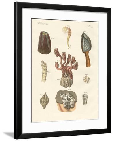 Cirrhipodas, Bristleworms or Brachiopods--Framed Art Print