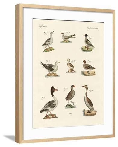 Different Kinds of Waterbirds--Framed Art Print