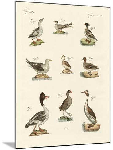 Different Kinds of Waterbirds--Mounted Giclee Print