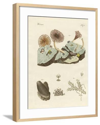 Zoophytes and Animal Plants--Framed Art Print