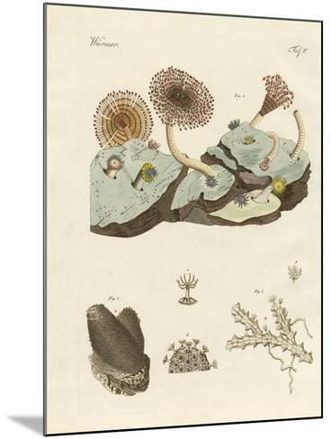 Zoophytes and Animal Plants--Mounted Giclee Print