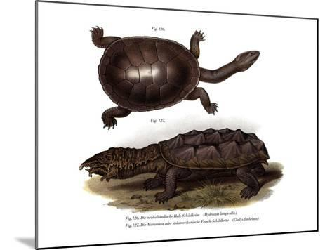 Common Snake-Necked Turtle--Mounted Giclee Print