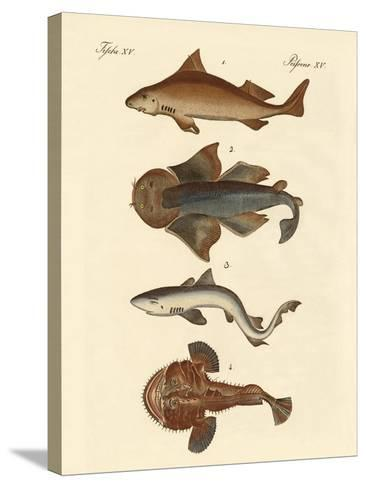 Different Kinds of Sharks--Stretched Canvas Print