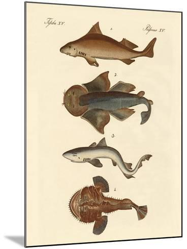 Different Kinds of Sharks--Mounted Giclee Print